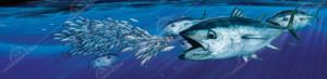 bluefin-boat-wrap