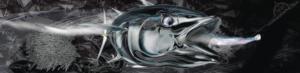 bluefin-carbon-wrap