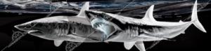 shark-boat-wrap
