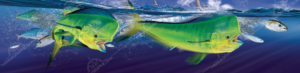 mahimahi-boat-wrap