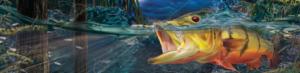 bass-boat-wrap-graphics